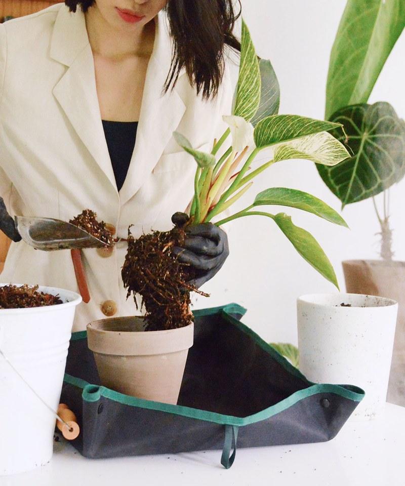 PLANT MORE PLANTS 聯名植栽換盆墊